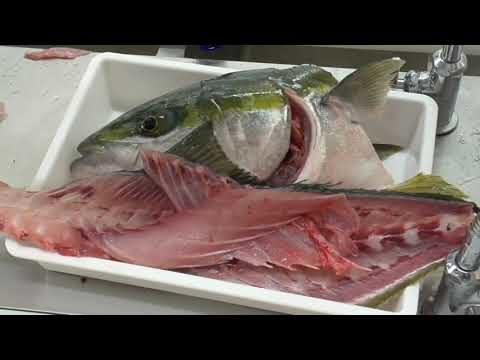 漁師さんに頂いた天然の4k超の青物魚ブリをさばいて皮を引いてお刺身に。頭を割って大根煮込み。カマは塩焼き用にお持ち帰り用に。釣太郎の魚調理入門。
