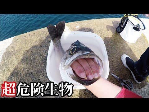 堤防で釣れた大物を解体中に危険生物に襲われた