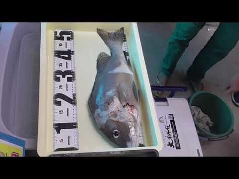 調理方法をお伺いし、検寸し金額もお知らせするので、魚は店頭へお持ち込みください。釣り人に代わり、魚を捌くサービスが始まりました。これを利用すれば時短にもなり、体力に余裕も残ったままお家に帰れます。