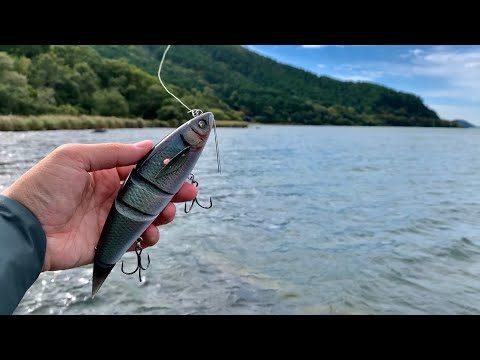 【琵琶湖北湖】デカバスを次々仕留める特殊なビッグベイト【1泊2日 釣りドキュメンタリー】